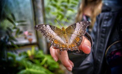 Butterfly House in London